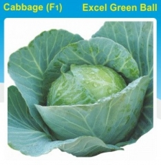 CABBAGE(F1)- EXCEL GREEN BALL- 10 GM. MRP-222. DISCOUNT-