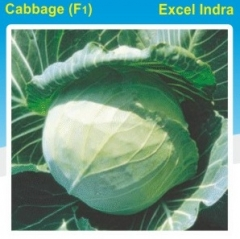CABBAGE(F1)- EXCEL INDRA- 10 GM. MRP-295. DISCOUNT-