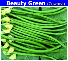 COWPEA-BEATY GREEN-500 GM.MRP-415.ZYGOTE SEEDS