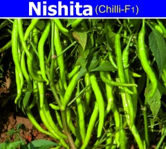 CHILLY (F1)-NISHITA-10 GM.MRP-480.ZYGOTE SEEDS